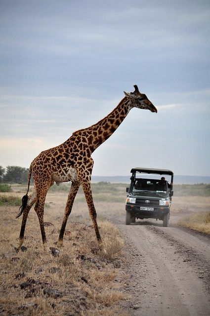What You Should Know Before Having A Wildlife Travel