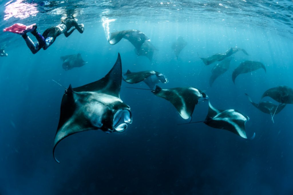 the Manta point should include in the exploring list during the Labuan Bajo open trip