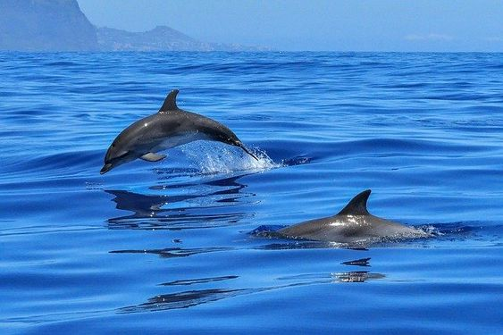 Meeting the Dolphins